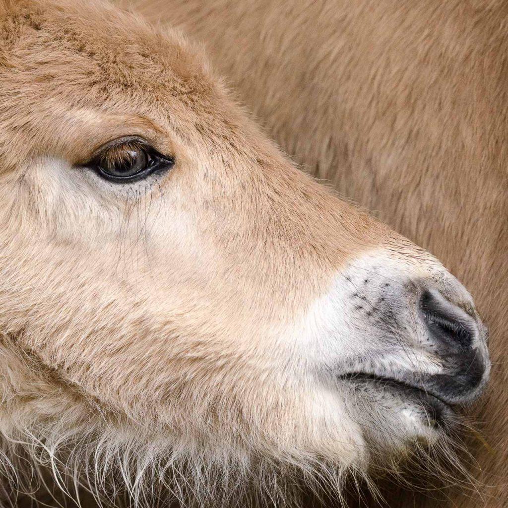 Pferdefotografie in der Schweiz - Fohlen