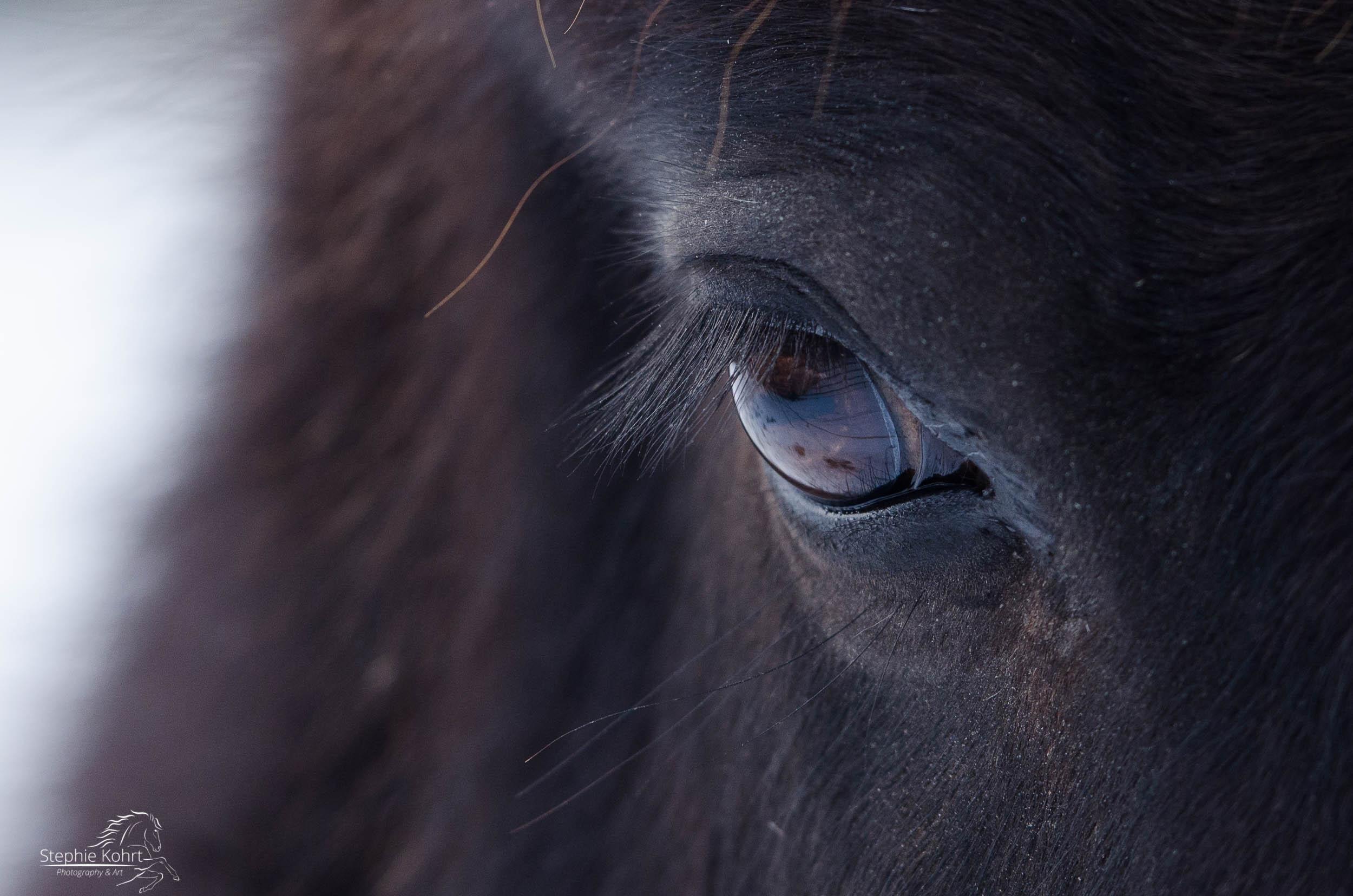 Pferdefotografie in der Schweiz Auge von schwarzem Isländer